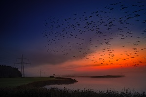 Sunrise Birds Flight 5k Wallpaper