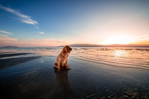 Sunrise Dog Ocean 5k Wallpaper
