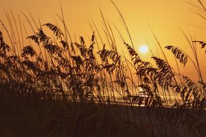 SunriseHuntington Beach State Park 8k Wallpaper