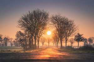 Sunrises And Sunsets Trees Sun Fog 4k Wallpaper