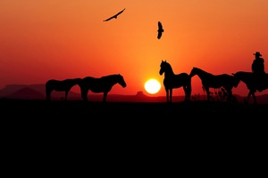 Sunset Horse Silhouette 4k Wallpaper