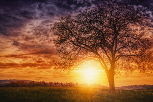 Sunset Nature Trees
