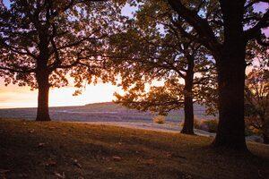 Sunset Suceava Trees Nature 5k