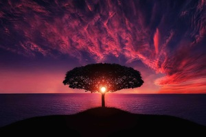 Sunset Tree Red Ocean Sky