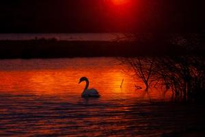 Swan Bird Lake 5k