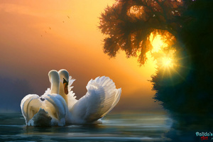 Swan Couple Wallpaper