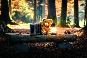 Teddy Bears Cute Alone in Forest Wallpaper