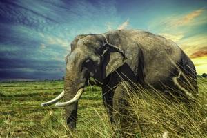 Thailand Elephant 5k