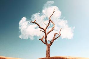 The Cloud Tree 5k Wallpaper