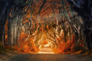 The Dark Hedges Armoy Ireland Road Avenue Forest 5k