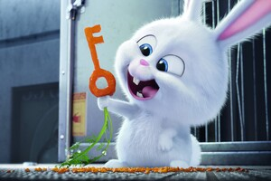 The Secrete Life of Pets Bunny Wallpaper