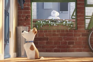 The Secrete Life of Pets Movie Main Character Wallpaper