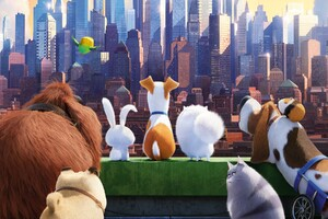 The Secrete Life of Pets Movie Wallpaper
