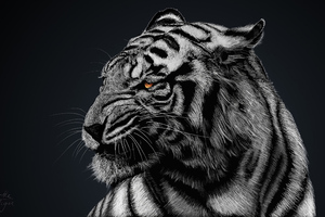 Tiger Glow Wallpaper