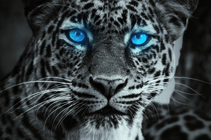 Tiger Glowing Blue Eyes Wallpaper