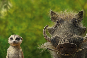 Timon And Pumbaa Wallpaper