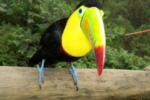 Toucans Wallpaper