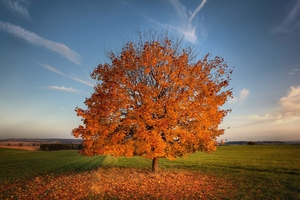 Tree Autumn Field Wallpaper