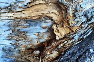 Tree Bark Pattern Wallpaper
