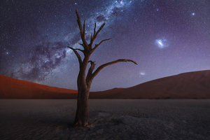 Tree Desert Milky Way 4k