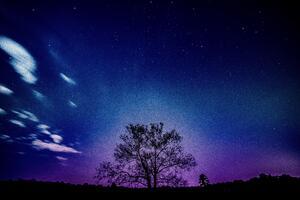 Tree Galaxy Sky 8k Wallpaper