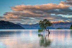 Tree Inside Lake Wallpaper