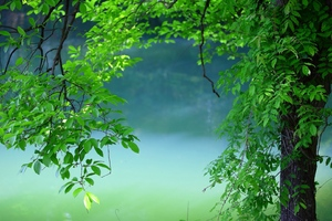 Tree Leaves Summer Wallpaper