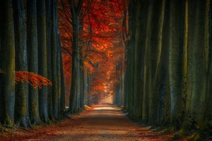 Tree Lined Winter Fall Alone Road