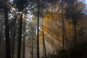 Tree Nature Wood Sun Fog Leaf Dawn Light Wallpaper