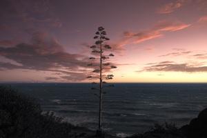 Tree Ocean Seascape Sky 5k Wallpaper