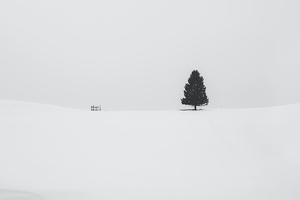 Tree Snow 4k Wallpaper