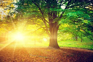 Tree Sunrise Morning