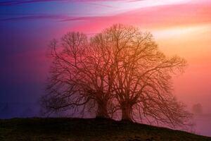 Tree Sunset Dawn 5k