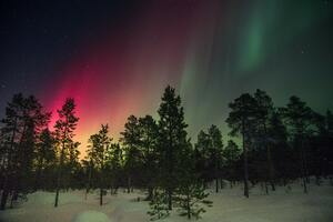 Trees And Aurora Rays Wallpaper