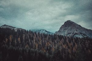 Trees And Mountains 4k