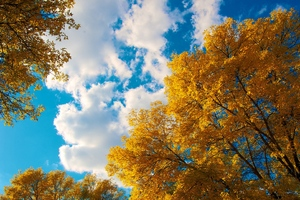 Trees Autumn Clouds Wallpaper