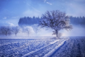 Trees Covered With Snow Fog Landscape Winter 4k