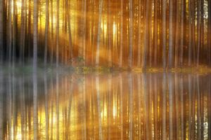 Trees Lakes Sunbeams Wallpaper