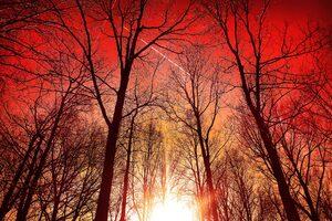 Trees Silhouette Sky 4k