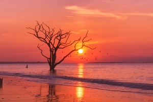 Trees Sunset Birds Water Body 4k Wallpaper