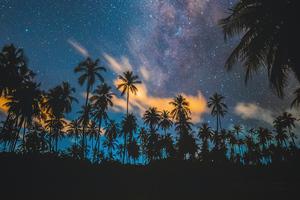 Tropical Palm Trees Lake 5k Wallpaper