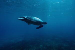 Turtle Underwater 4k Wallpaper