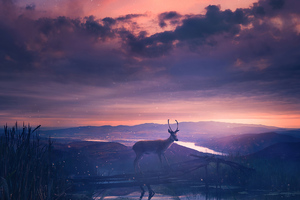 Twilight Deer 4k