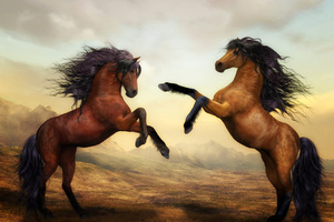 Two Horses Dance 4k Wallpaper