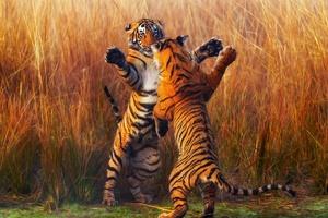 Two Tiger Fightining