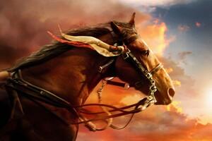 War Horse Wallpaper