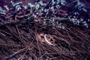 Weeding Rings