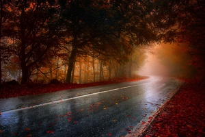 Wet Rainy Road Leaf Fallen Hd