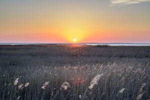 Wheat Field 5k