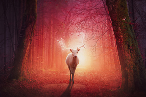 White Deer In Magical Forest 4k Wallpaper